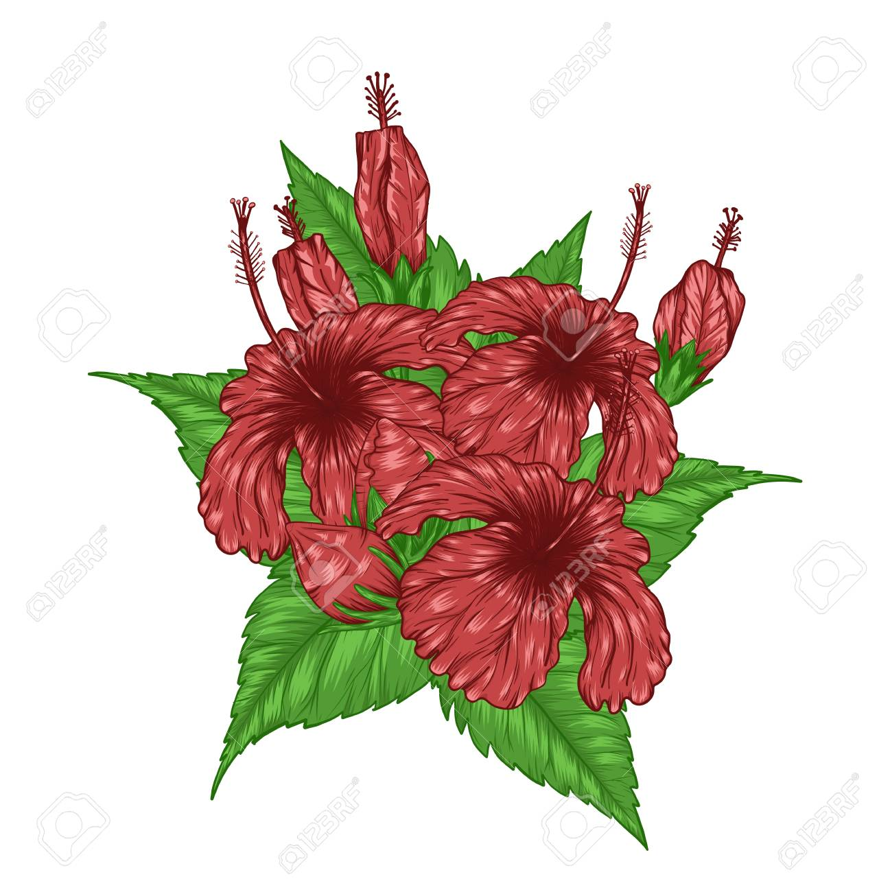 hibiscus flower vector by hand drawing beautiful flower on white rh 123rf com vintage flower vector free download vintage flowers vector free