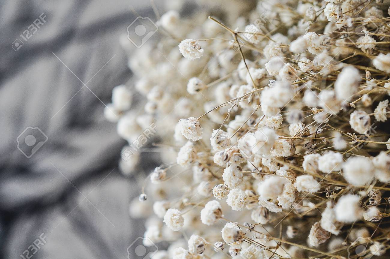 Small White Dried Flower In Vintage Style Stock Photo Picture And