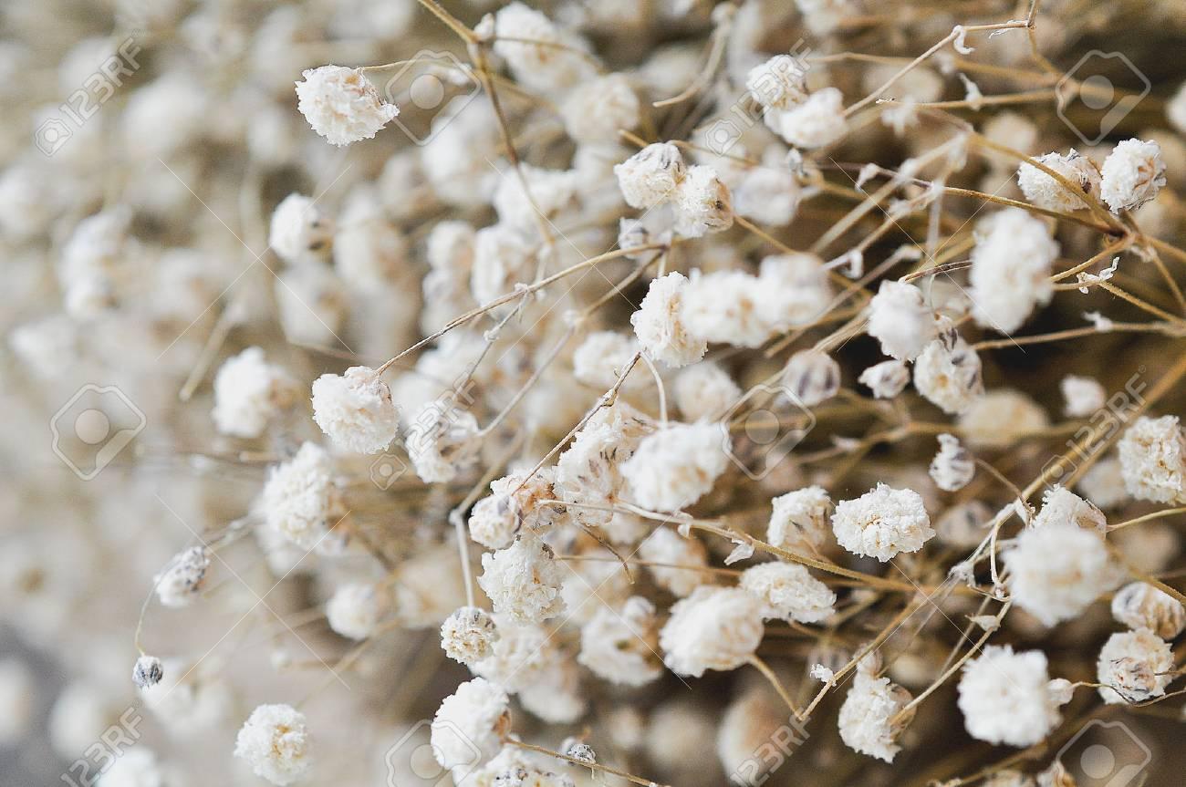 Fond de petites fleurs séchées blanches dans un style vintage