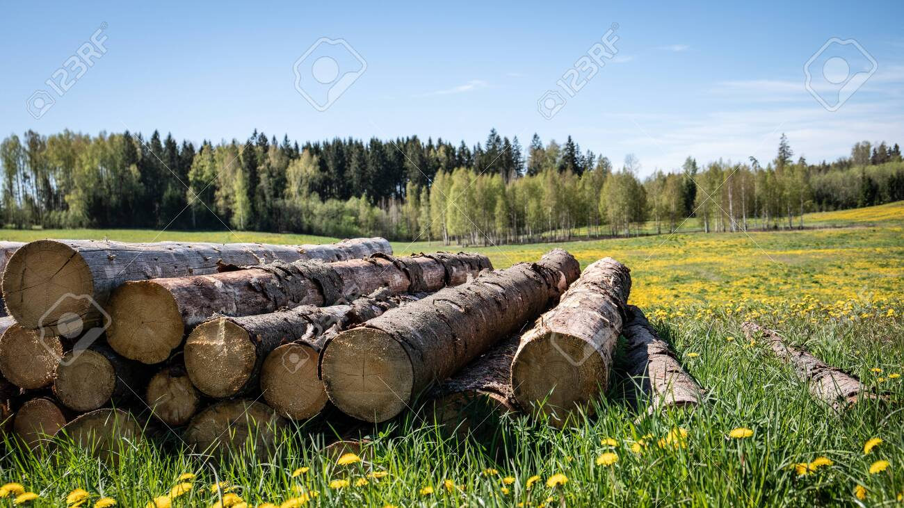 Saw logs stacked in a pile. Green meadow with yellow dandelions - 148581371