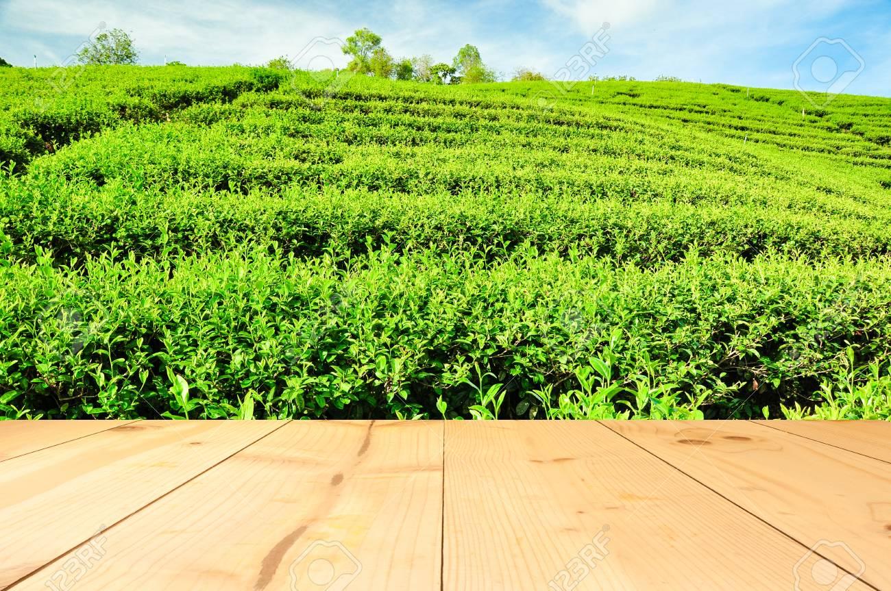 Campo De árbol De Té Verde Con Terraza De Madera