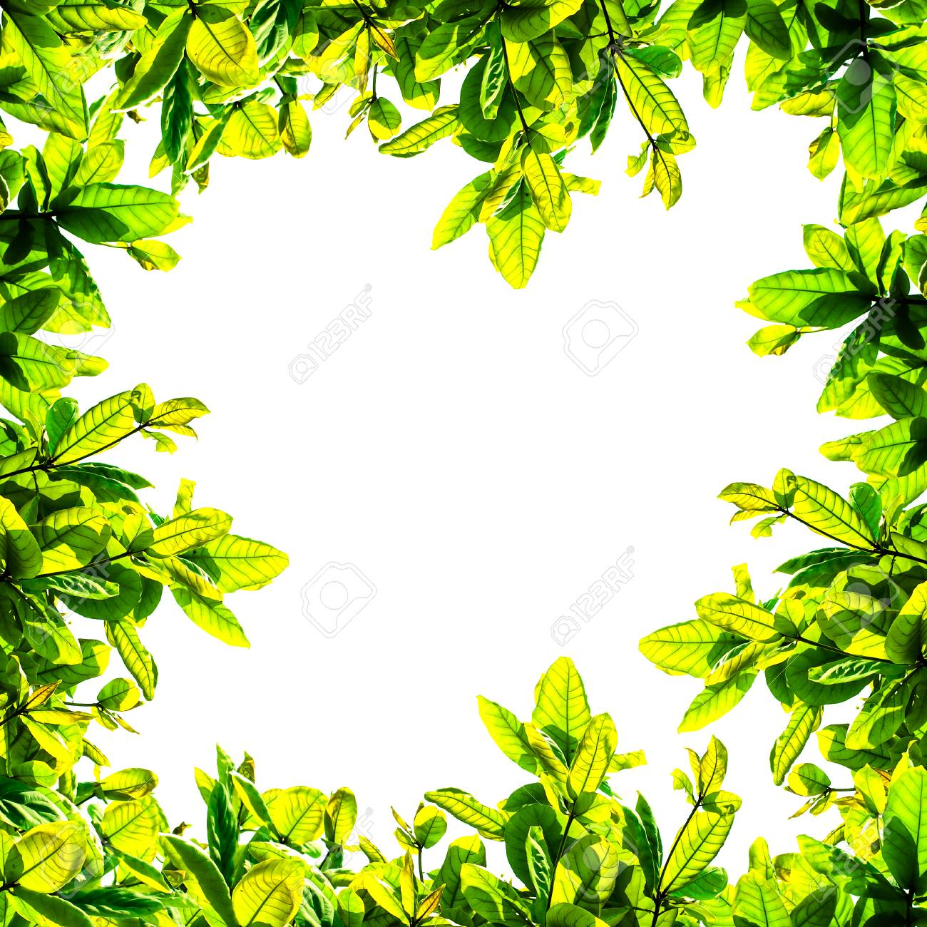 nature frame from green and yellow leaves on white background stock photo picture and royalty free image image 51058159 123rf com