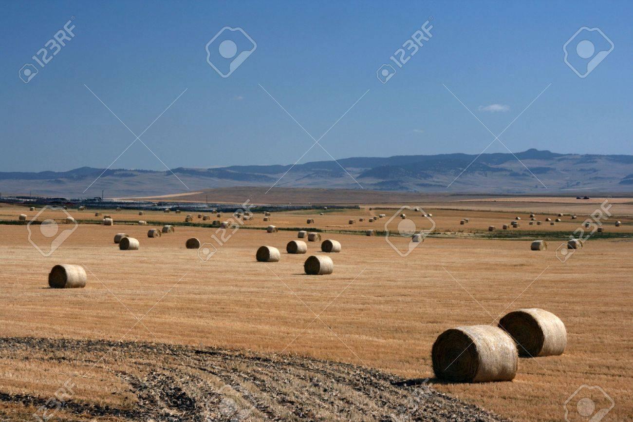 Hay bales. Summertime rural landscape. Alberta prairie fields. Stock Photo - 1960498