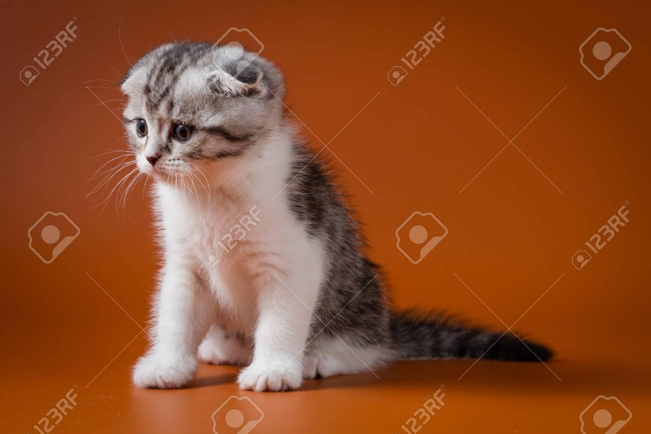 Immagini Stock Cute Gattino Seduto Su Uno Sfondo Bianco Un Mese