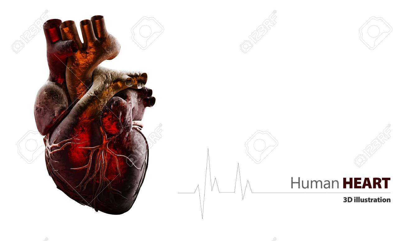 3D Abbildung Der Anatomie Des Menschlichen Herzens Isoliert Auf Weiß ...