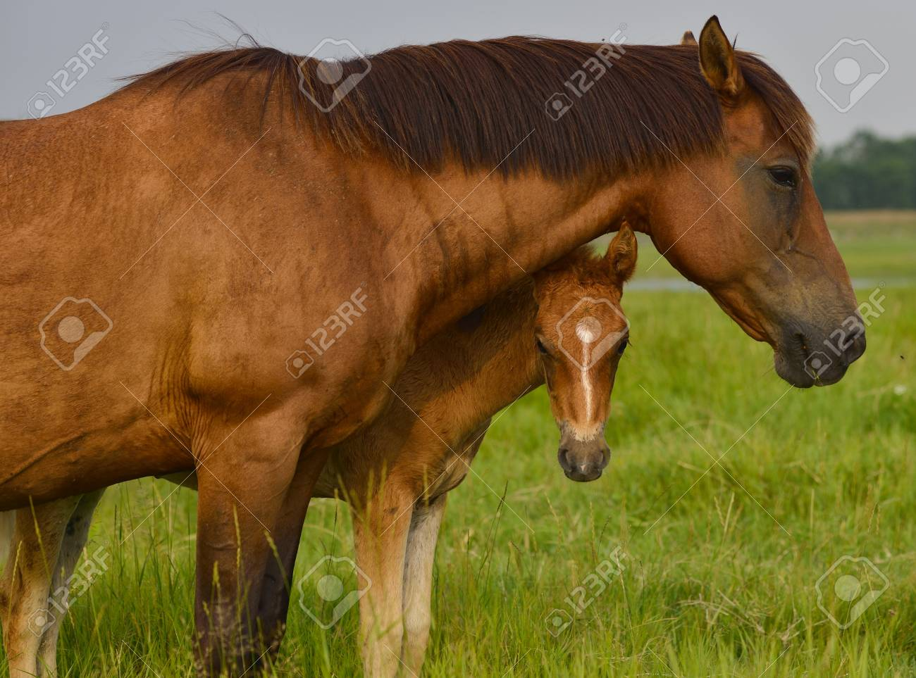 Mother Horse And Her Baby Colt Stock Photo Picture And Royalty Free Image Image 62862498