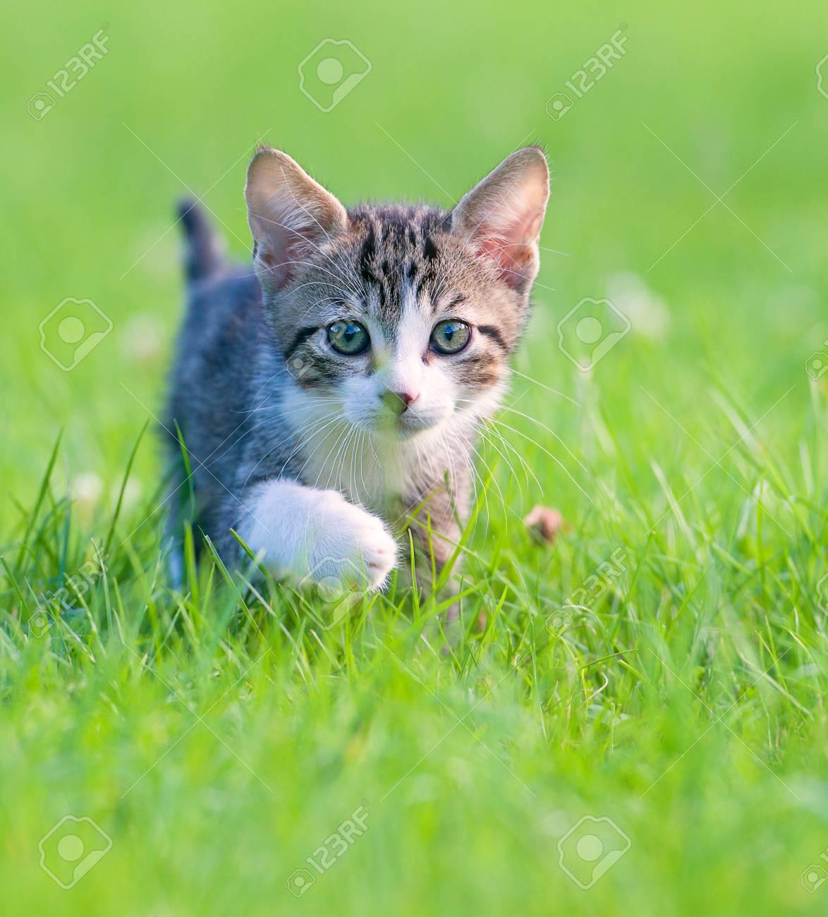 Little striped kitten hiding in the grass - 94117809