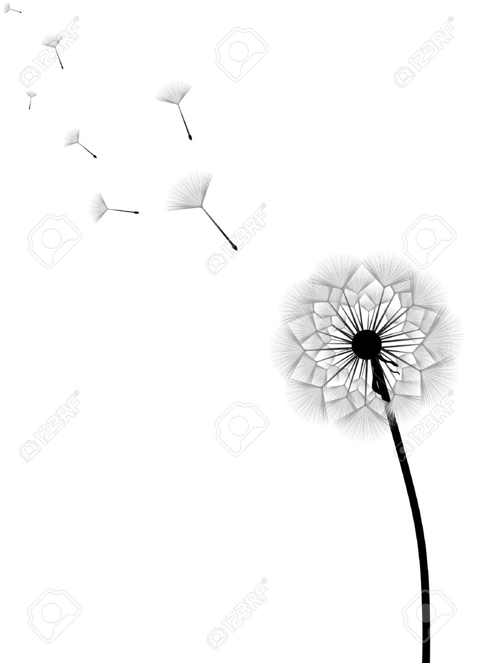 Vector illustration of dandelion with flying seeds isolated on white background Stock Vector - 5174890