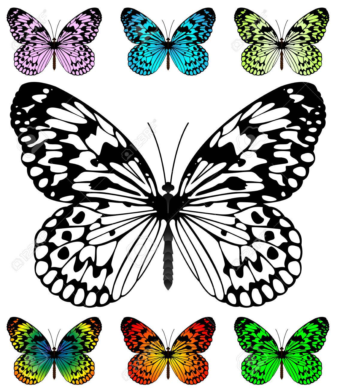 butterfly wings stock photos u0026 pictures royalty free butterfly