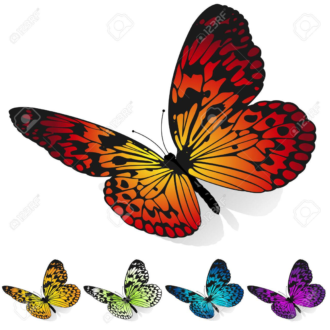 vector set of colorful butterflies sitting on the surface isolated