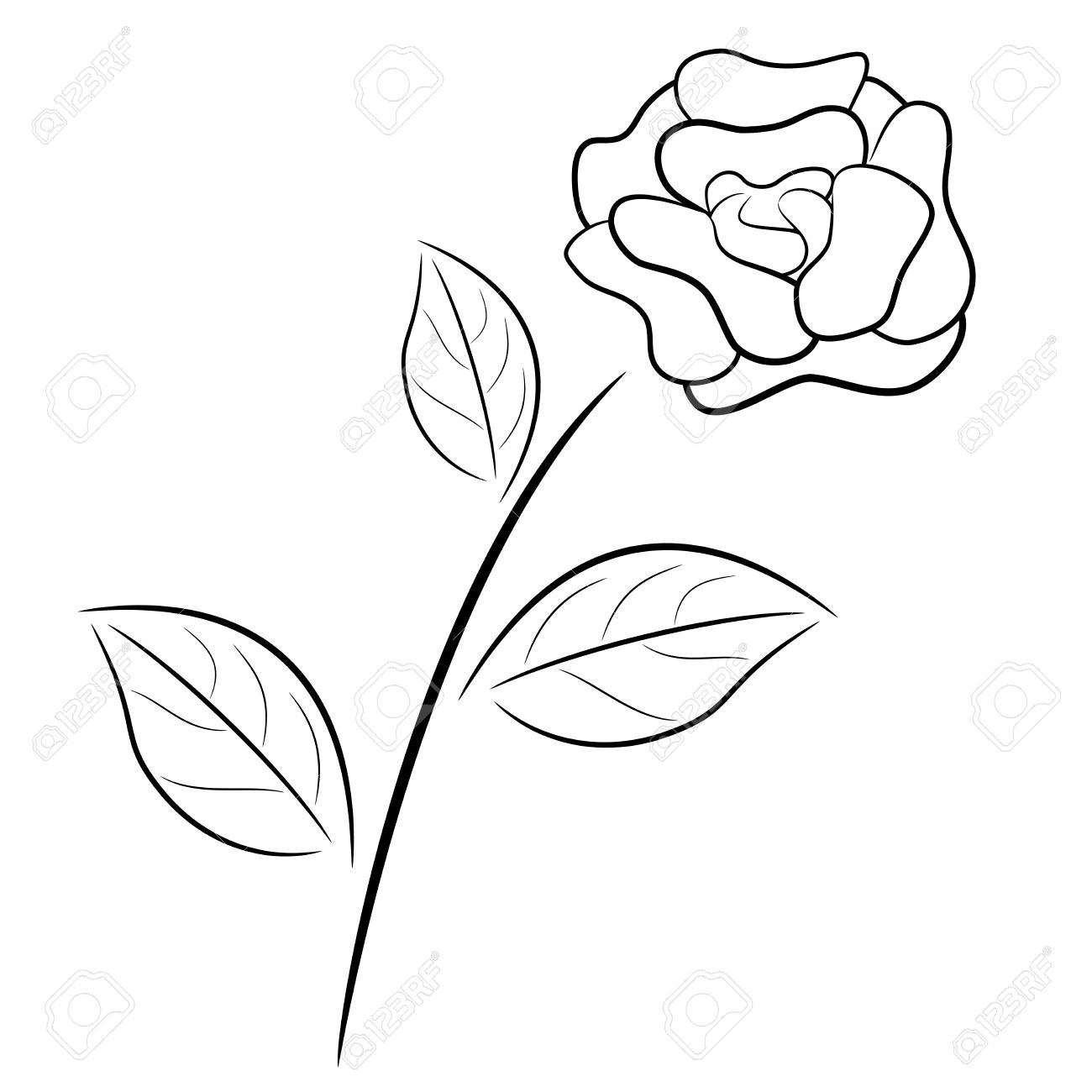 Rose Drawing Abstract Same Day Flower Delivery