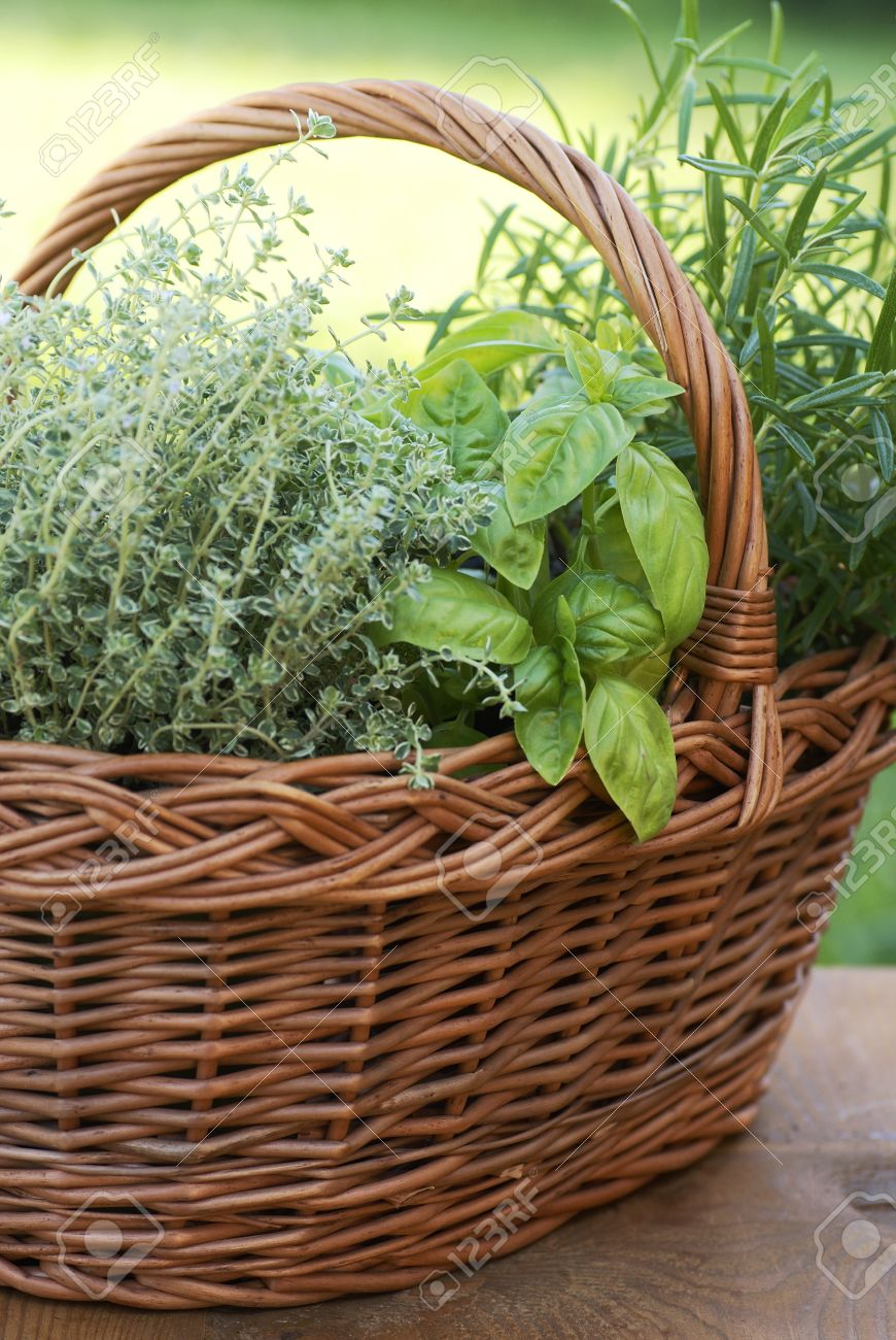 Basket With Thyme, Basil And Rosemary In The Garden Stock Photo ...