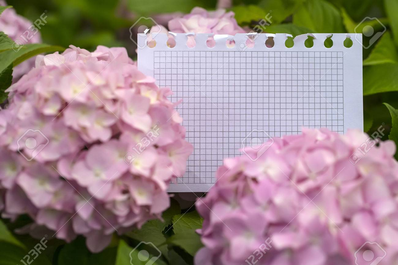 Blank Paper Piece From Notepad In Tender Hydrangea Flowers Stock