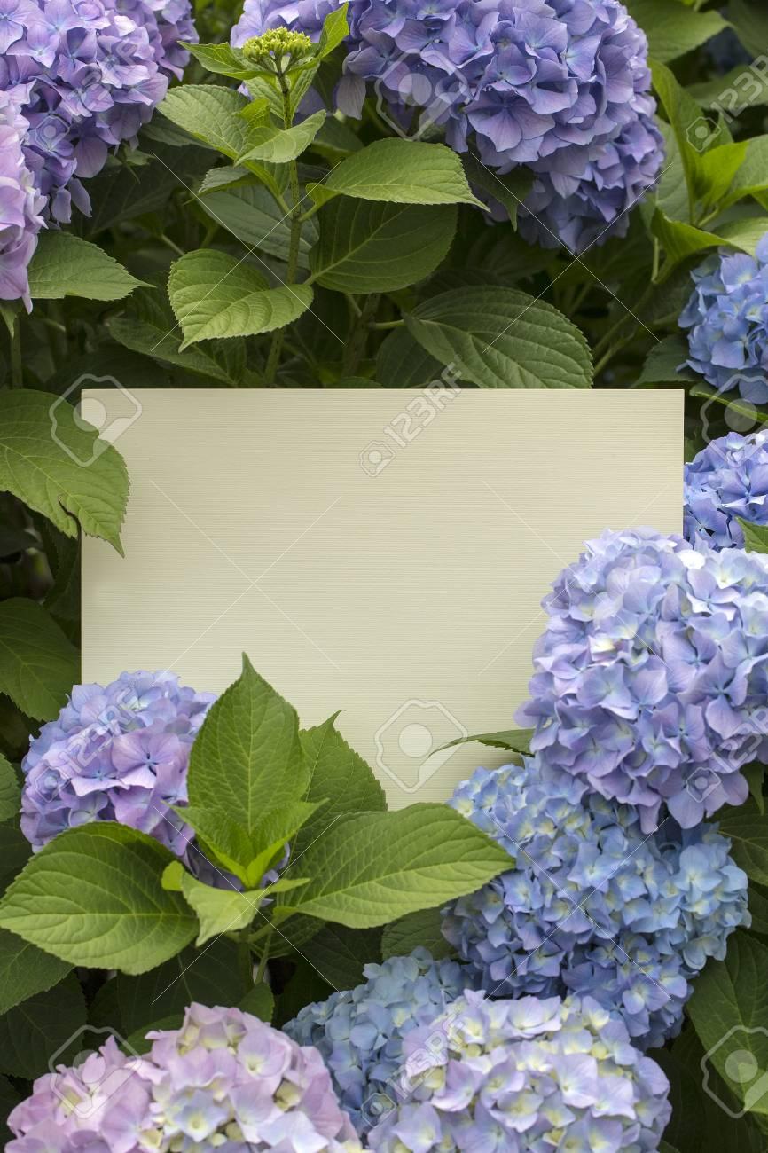 Blank Paper Note In Hydrangea Flowers Background Stock Photo