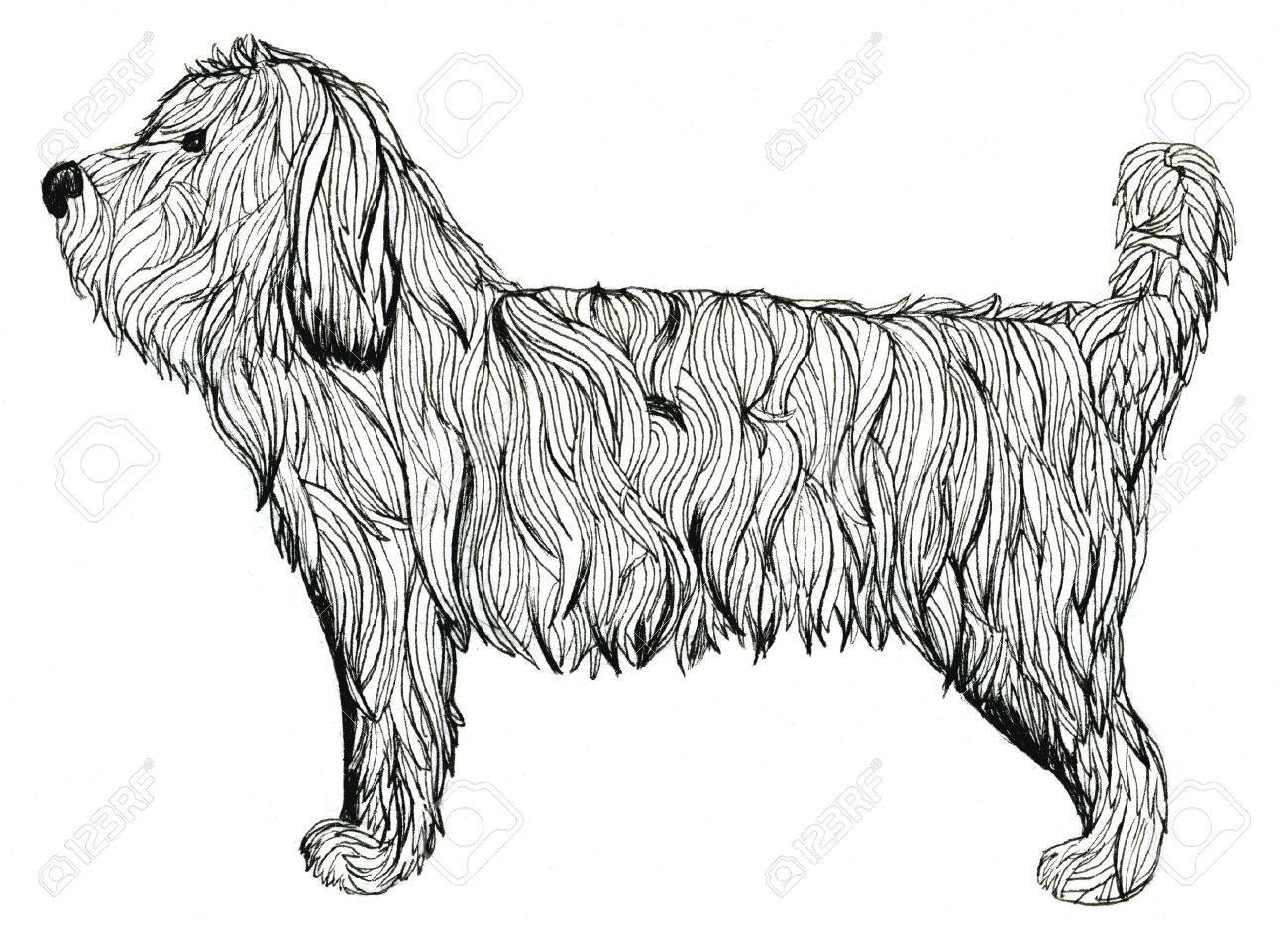 Illustration Mignon Shaggy Animal Chien Noir Et Blanc Sur Fond Blanc