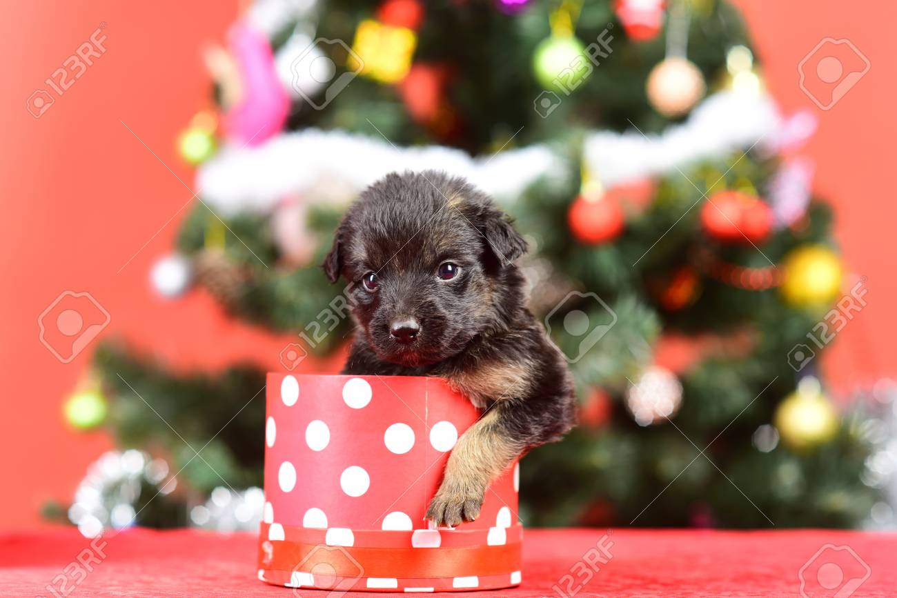 Year Of Dog Holiday Celebration Santa Puppy At Christmas Tree Stock Photo Picture And Royalty Free Image Image 90333011