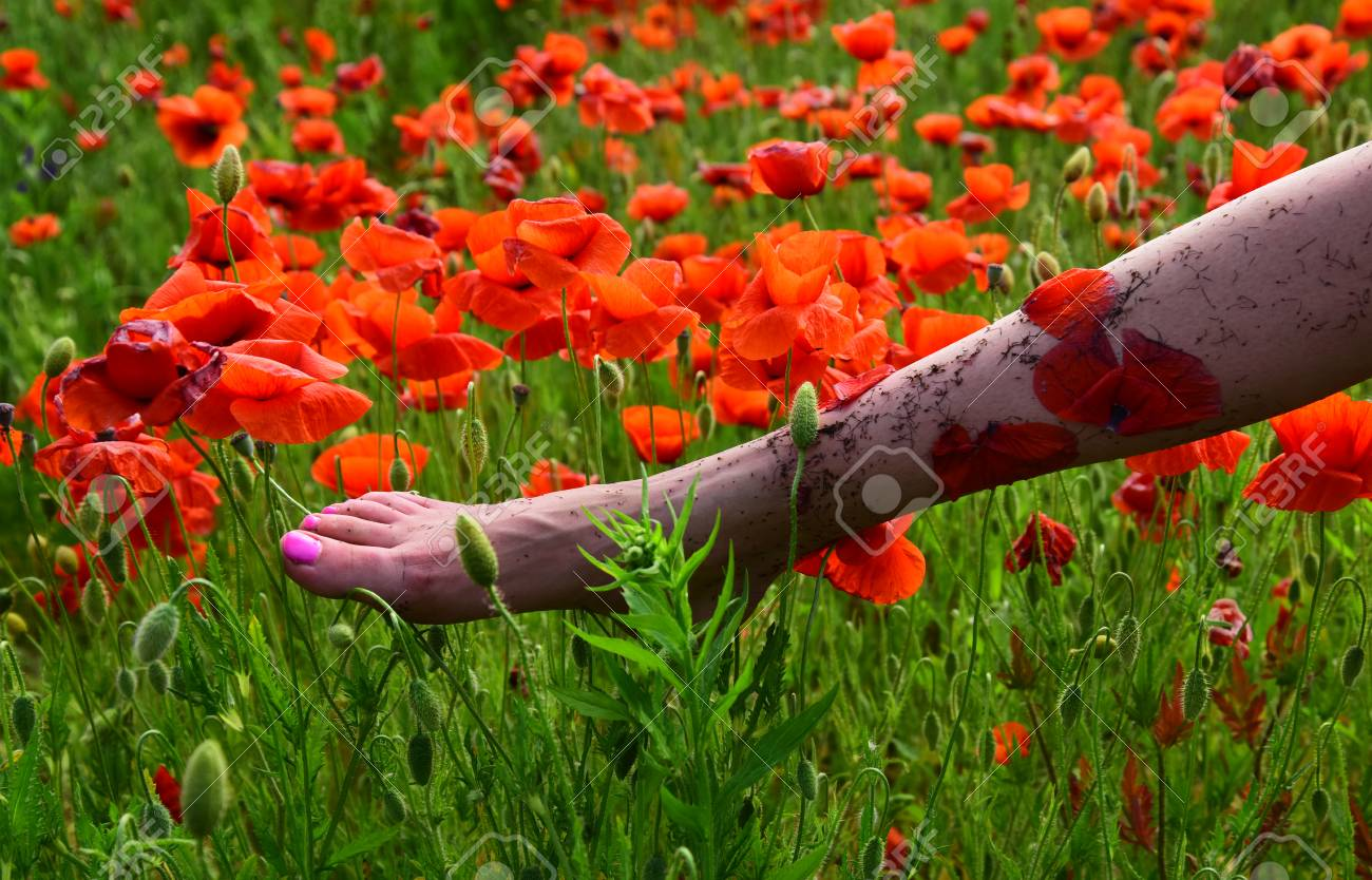 Summer Vacation Concept Beauty And Fashion Poppy Relaxation