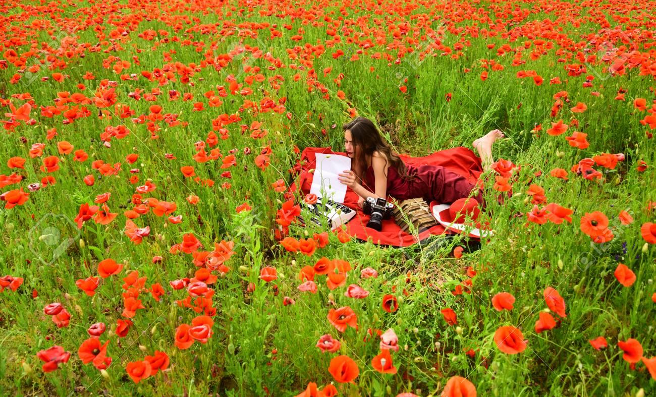 Opium Poppy Agile Business Ecology Opium Poppy Flower Field