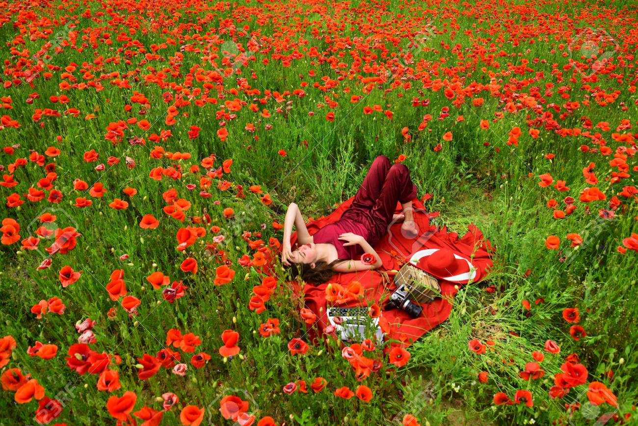 Image result for a field of poppy flowers