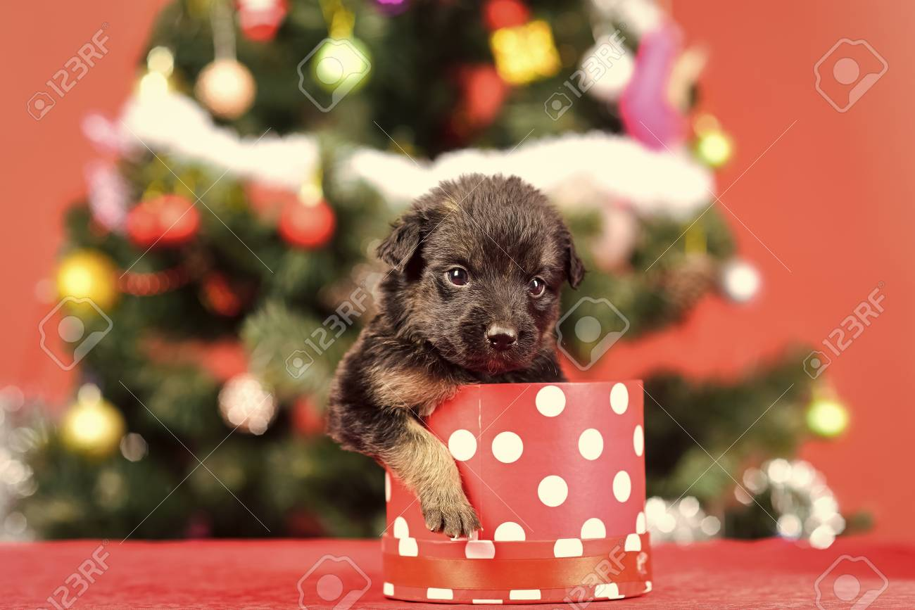 Year Of Dog Holiday Celebration Santa Puppy At Christmas Tree Stock Photo Picture And Royalty Free Image Image 109521940