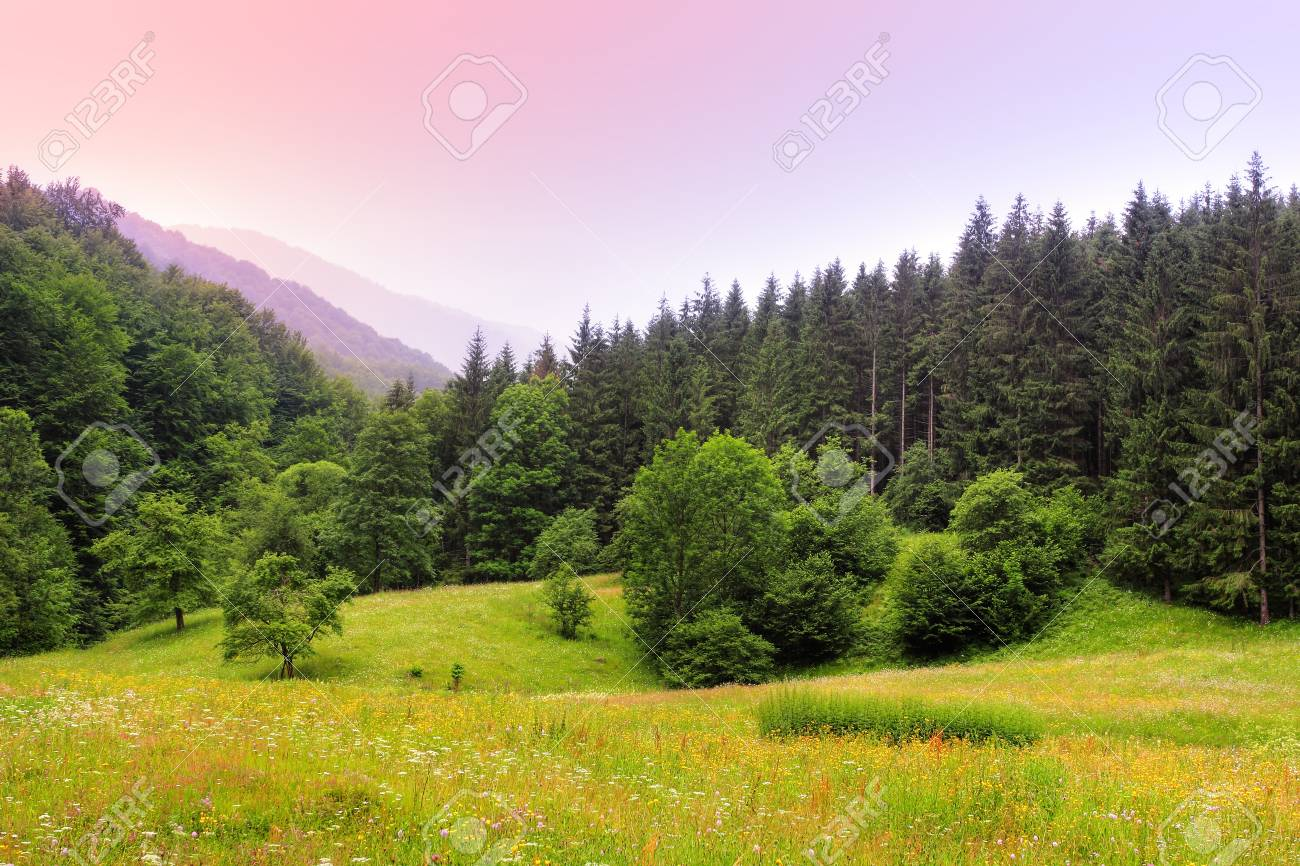 Beautiful landscape of Carpathian Mountains in Ukraine Stock Photo - 14900899