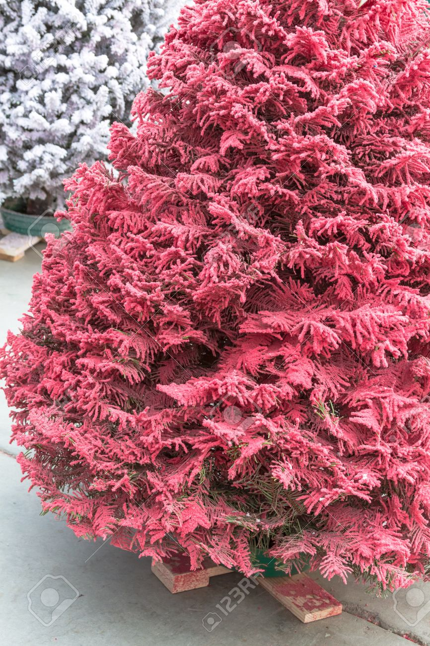 Flocked Christmas Tree Pink And White Flocked Christmas Trees Stock Photo Picture And