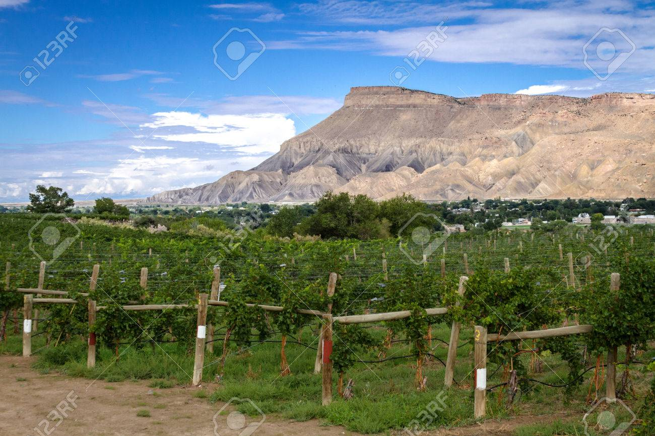 View of Book Cliff Mesas from Palisades Colorado vineyard at grape harvest Stock Photo - 22229246