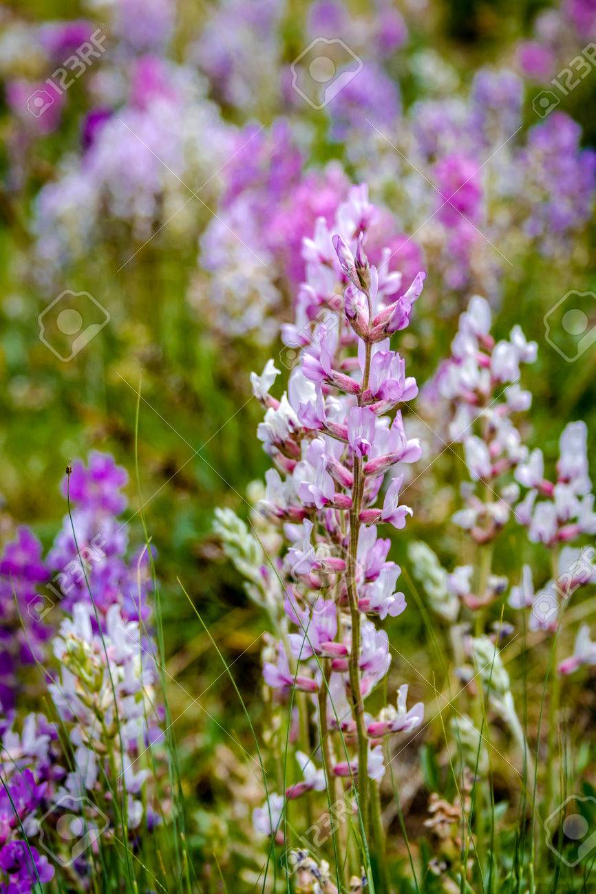 Bunch of white purple and pink wildflowers growing in mountain bunch of white purple and pink wildflowers growing in mountain meadow stock photo 29979079 mightylinksfo