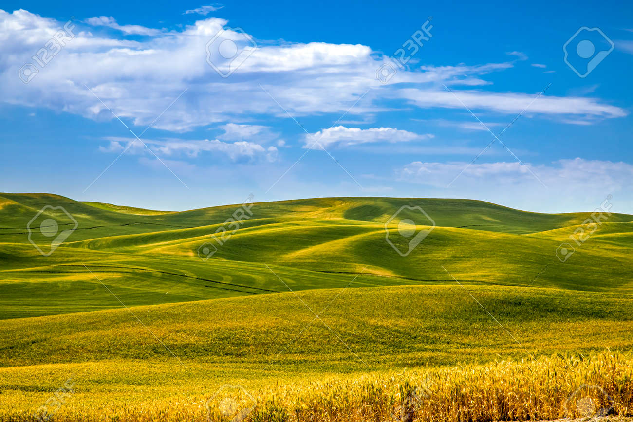 Summer blue skies over rolling fields of argricuture fields in eastern Washington State in the Palouse region - 153853146