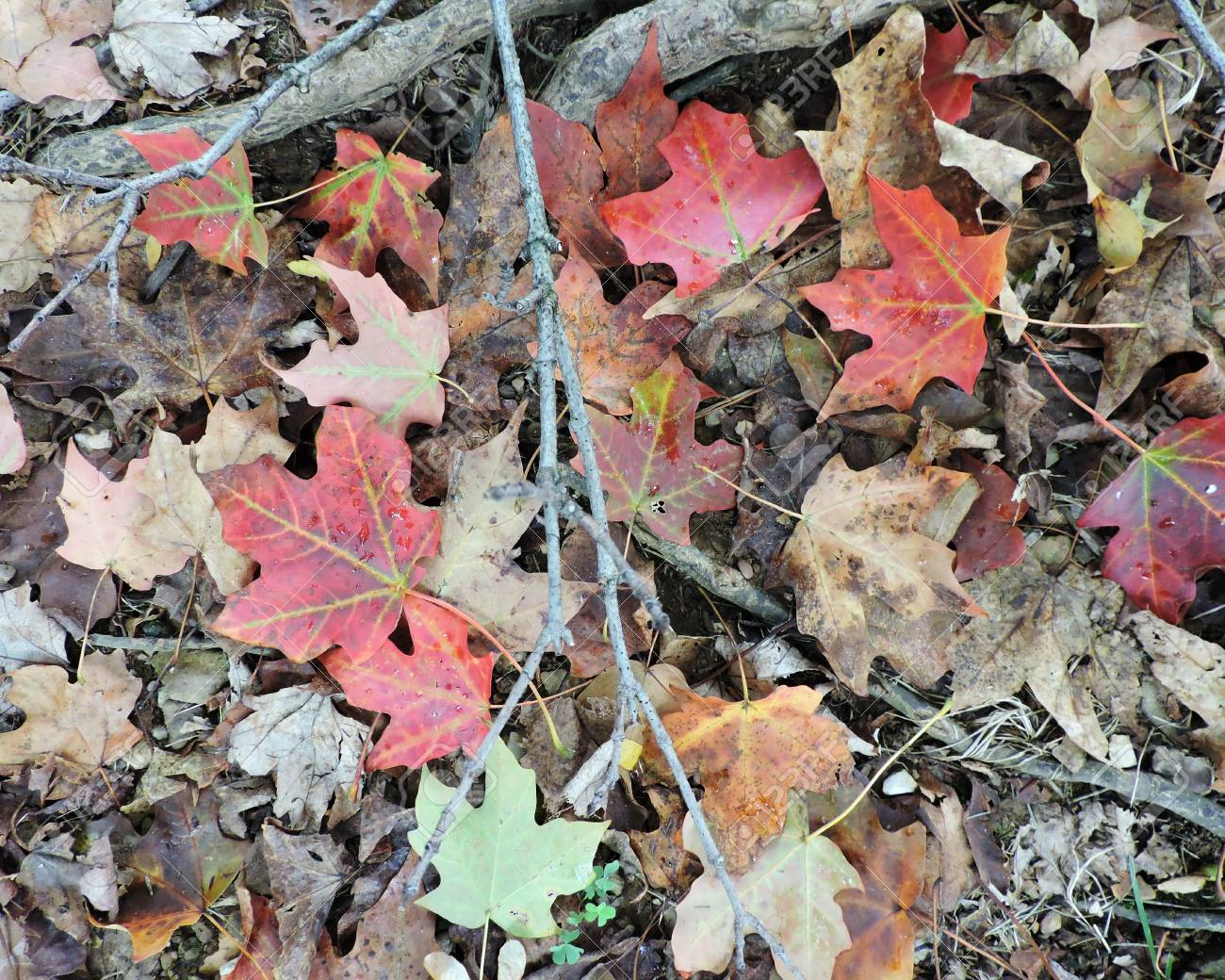 Colorful Autumn Leaves on Ground Stock Photo - 46781169