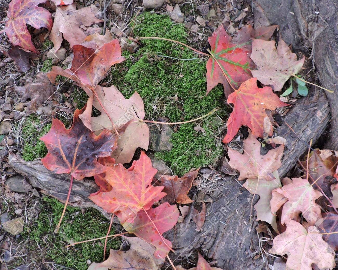 Orange Red Autumn Maple Leaves Background Stock Photo - 46781191