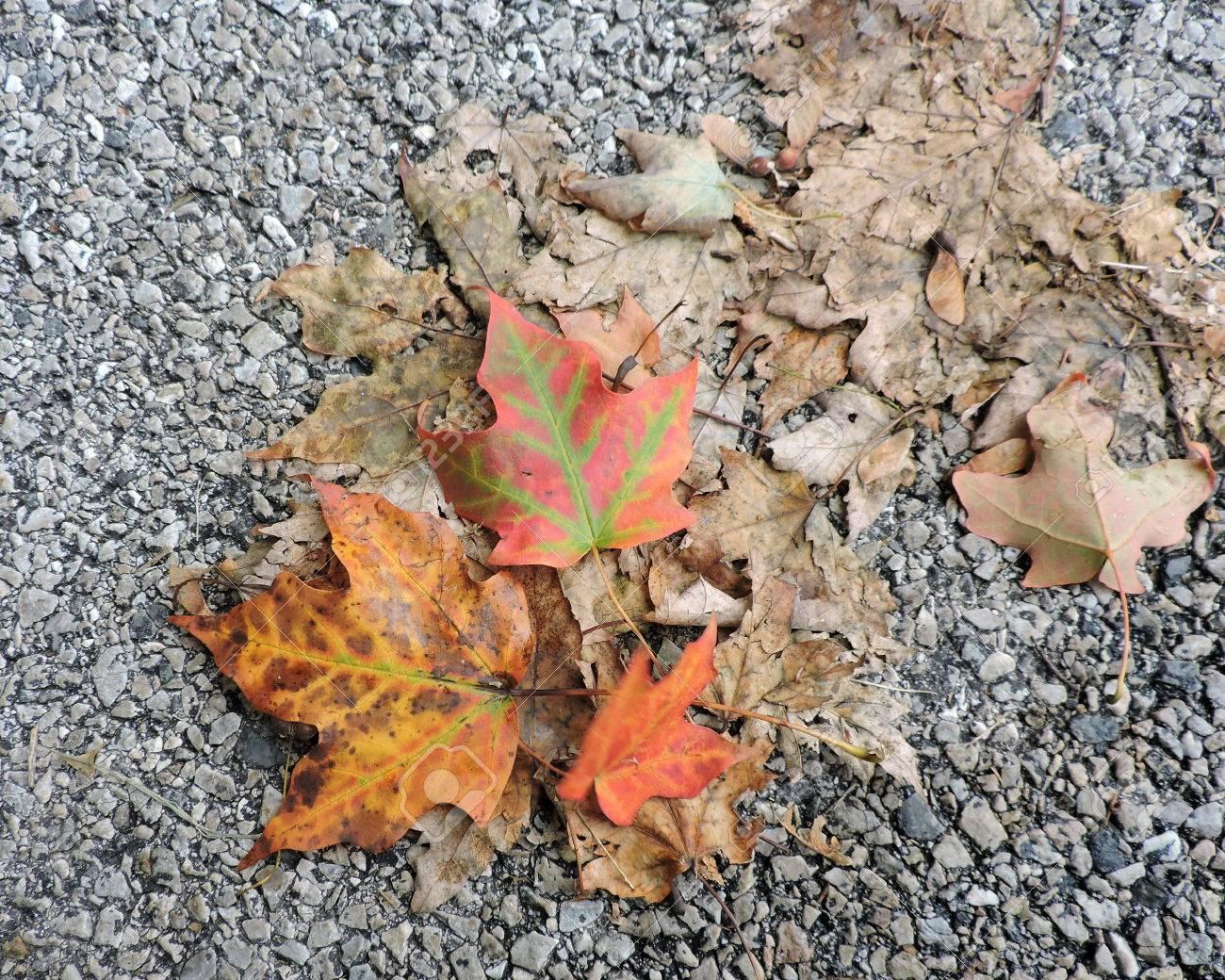 Fallen Autumn Leaves on Street Stock Photo - 46779506