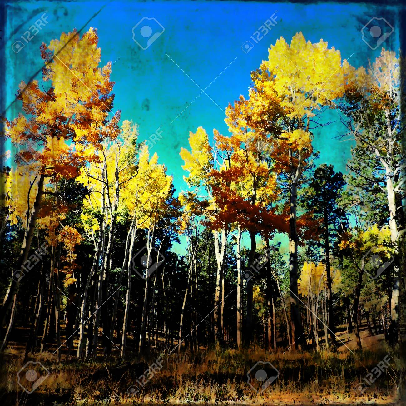 Aspen Forest Scene with Texture Stock Photo - 56978309