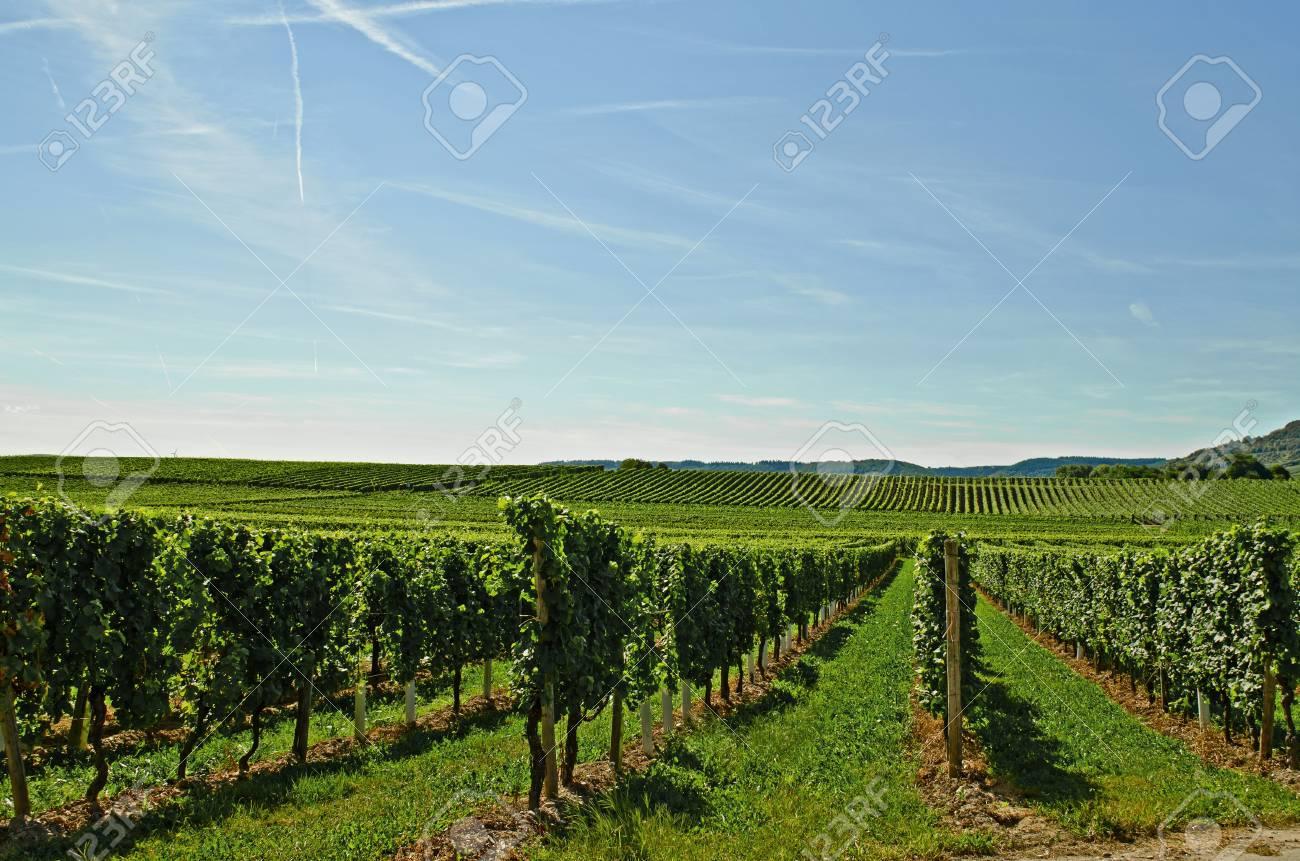 Vineyard Stock Photo - 17876498