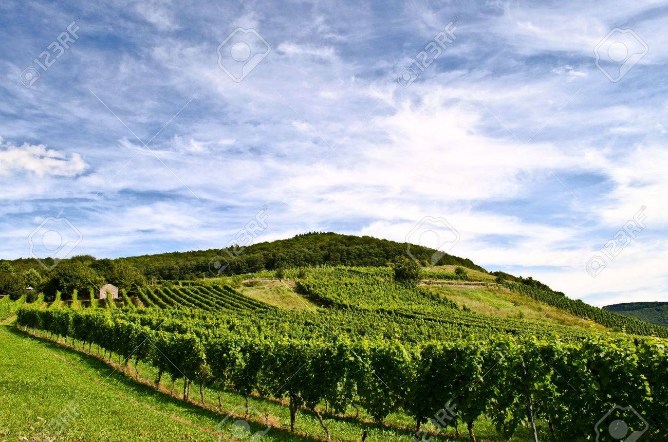 Vineyard Stock Photo - 17876485