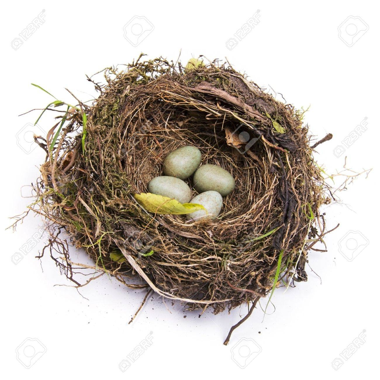 bird nest images u0026 stock pictures royalty free bird nest photos