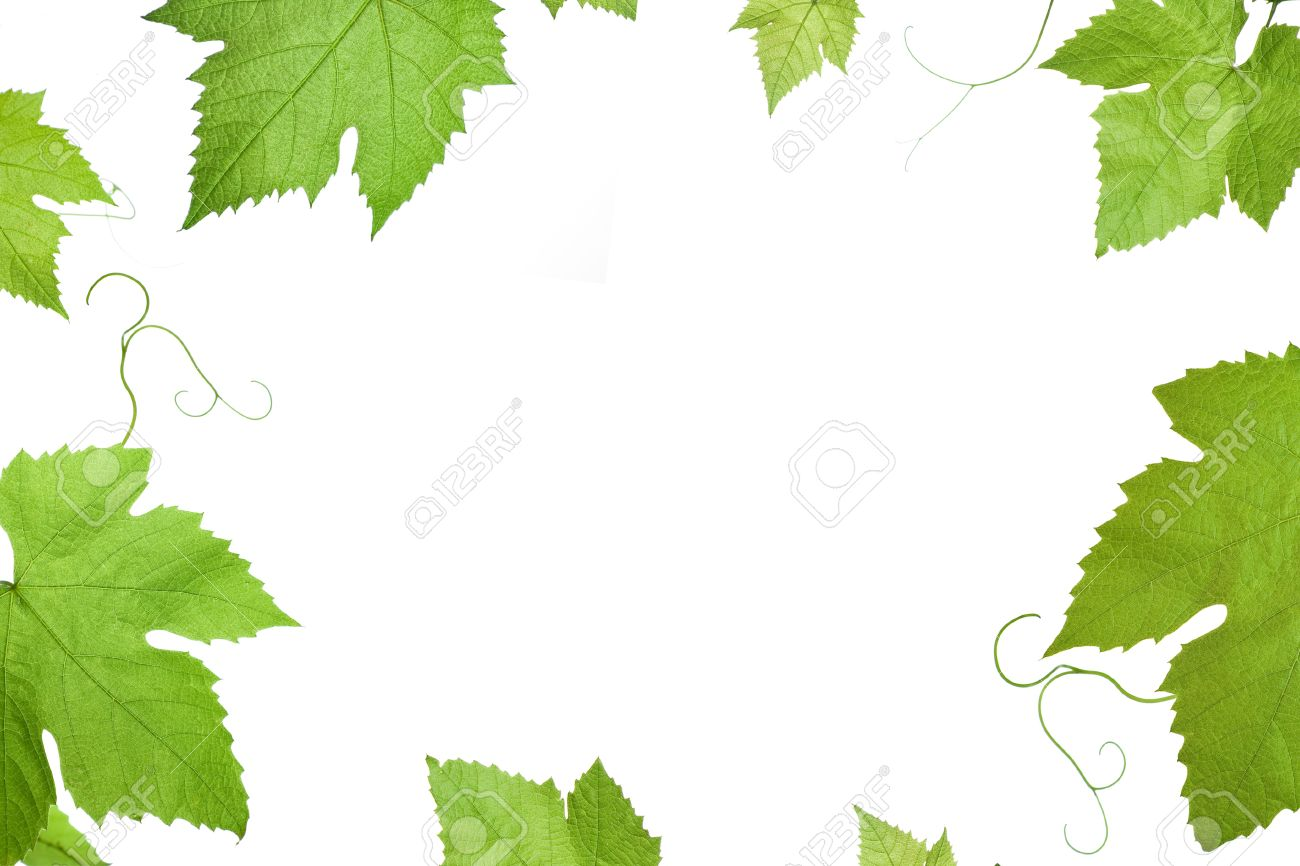 Frame Of Grape Or Vine Leaves Isolated On White Background With Stock Photo Picture And Royalty Free Image Image 1703165