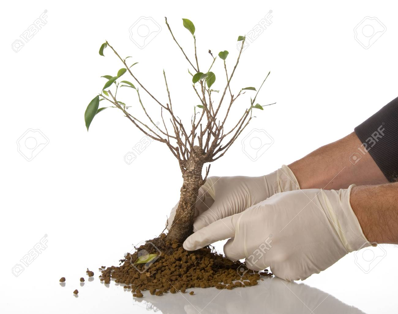 environment concept. take care of a small tree. isolated on a white background Stock Photo - 3650288