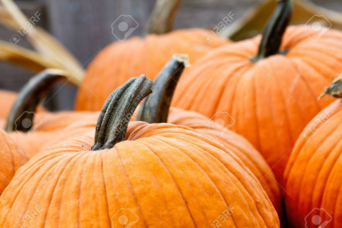 Top Stems Of The Pumpkin Shallow Depth Of Field Focus On Lead Stock Photo Picture And Royalty Free Image Image 14945185
