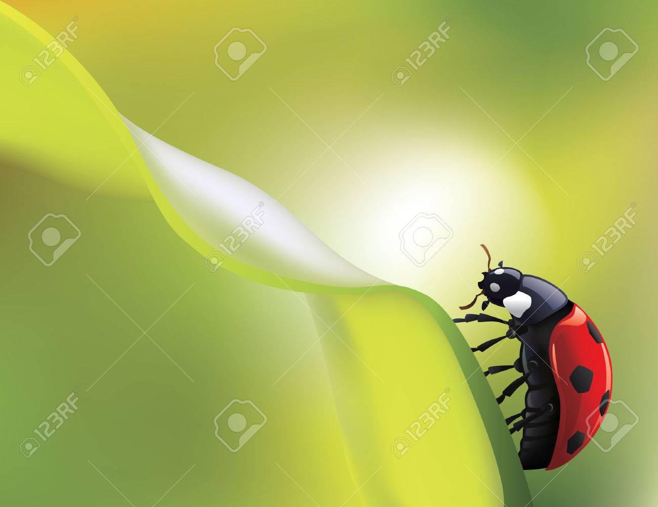 vector ladybird on green leaf Stock Vector - 5919392