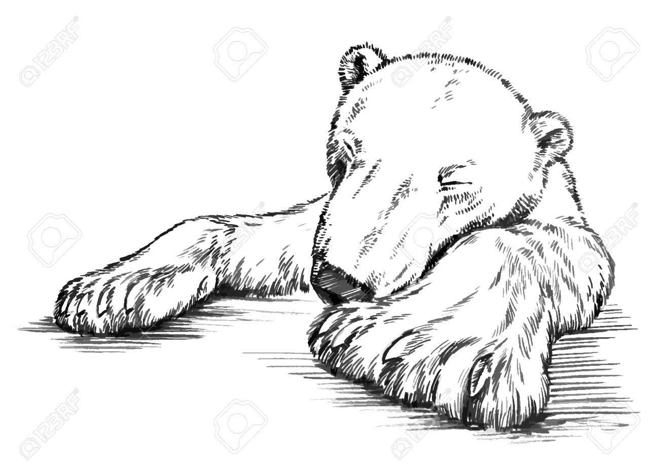 Drawing Bear Artwork