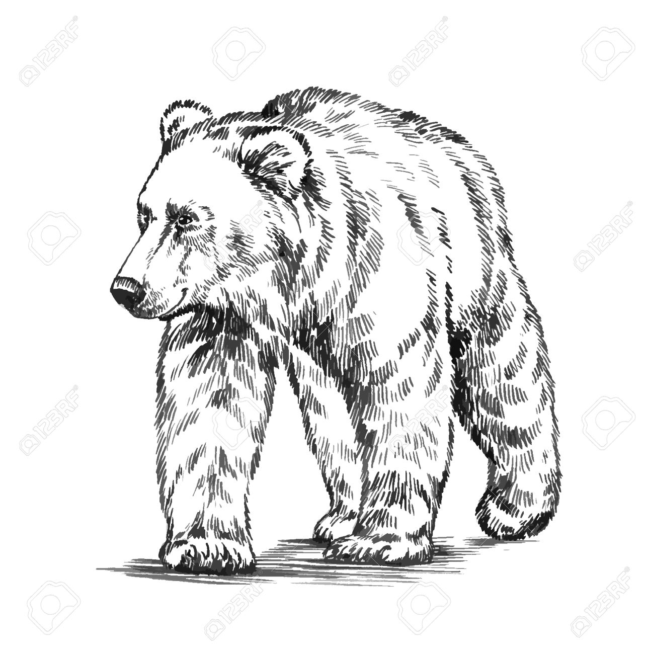 Black And White Engrave Ink Draw Isolated Vector Grizzly Bear ...