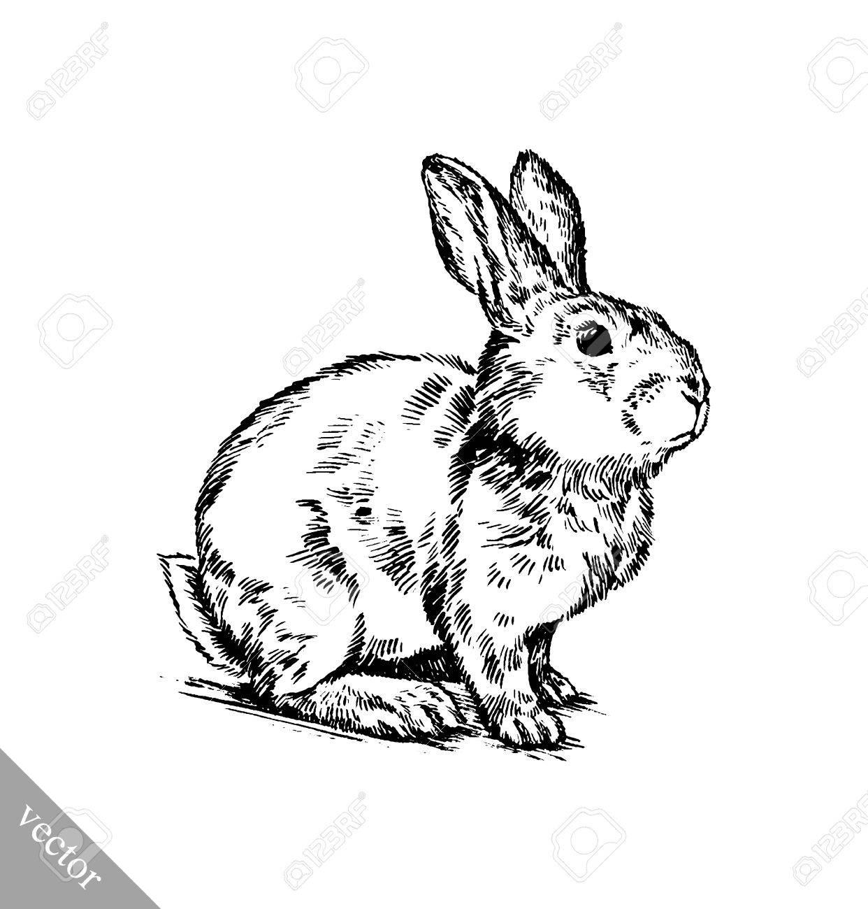 Zwart en wit vector borstel het schilderen inkt tekenen geïsoleerd konijn illustratie