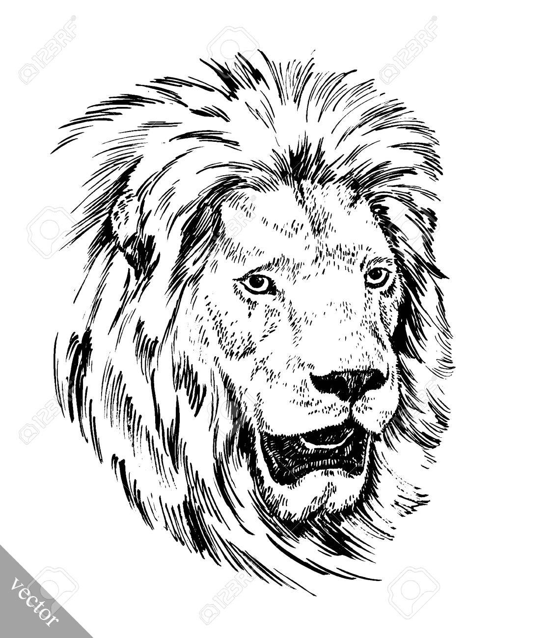 Black and white brush painting ink draw vector isolated lion illustration stock vector 49814972