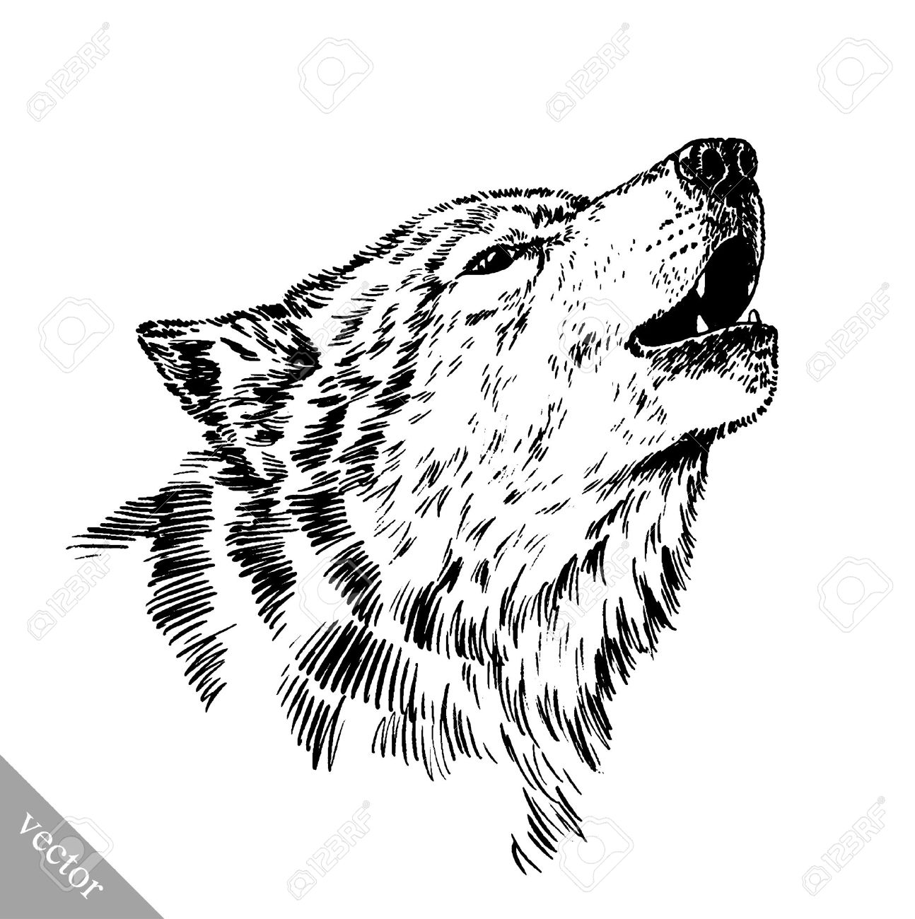 Black and white vector engrave ink draw isolated wolf stock vector 50051516