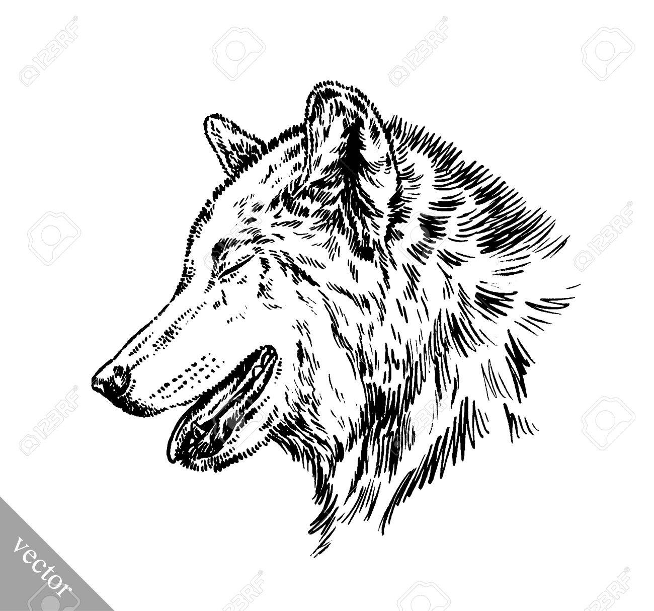 Black And White Vector Engrave Ink Draw Isolated Wolf Royalty Free