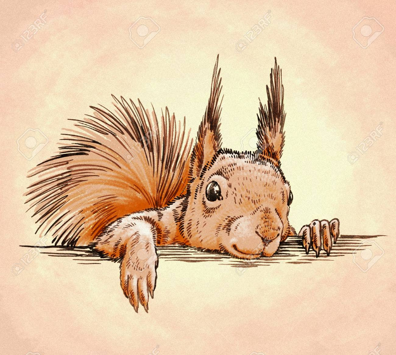 Farbe Gravieren Tinte Isoliert Eichhörnchen Abbildung Zeichnen