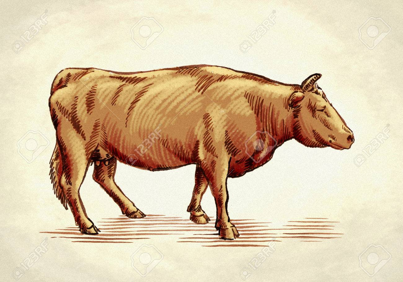 Cara melukis gambar sapi