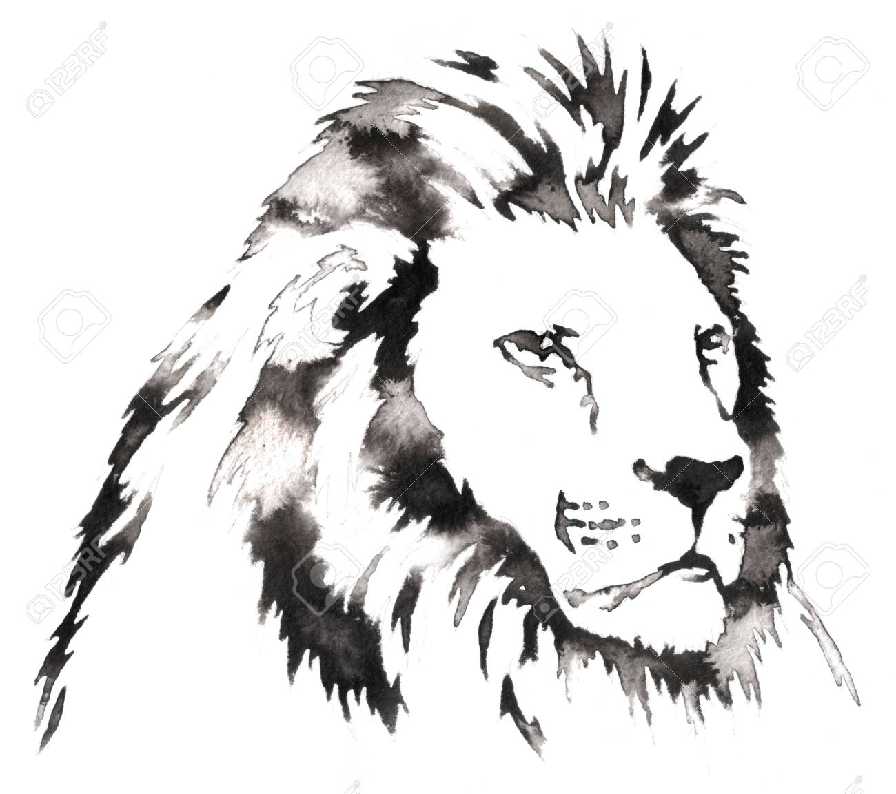 Black and white painting with water and ink draw lion illustration stock illustration 59716279
