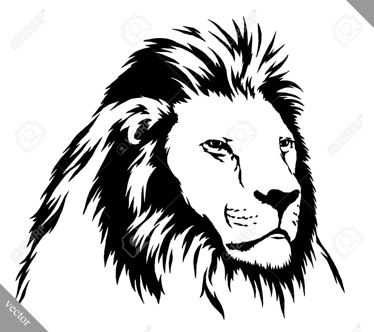Black and white linear draw lion vector illustration stock vector 59716287